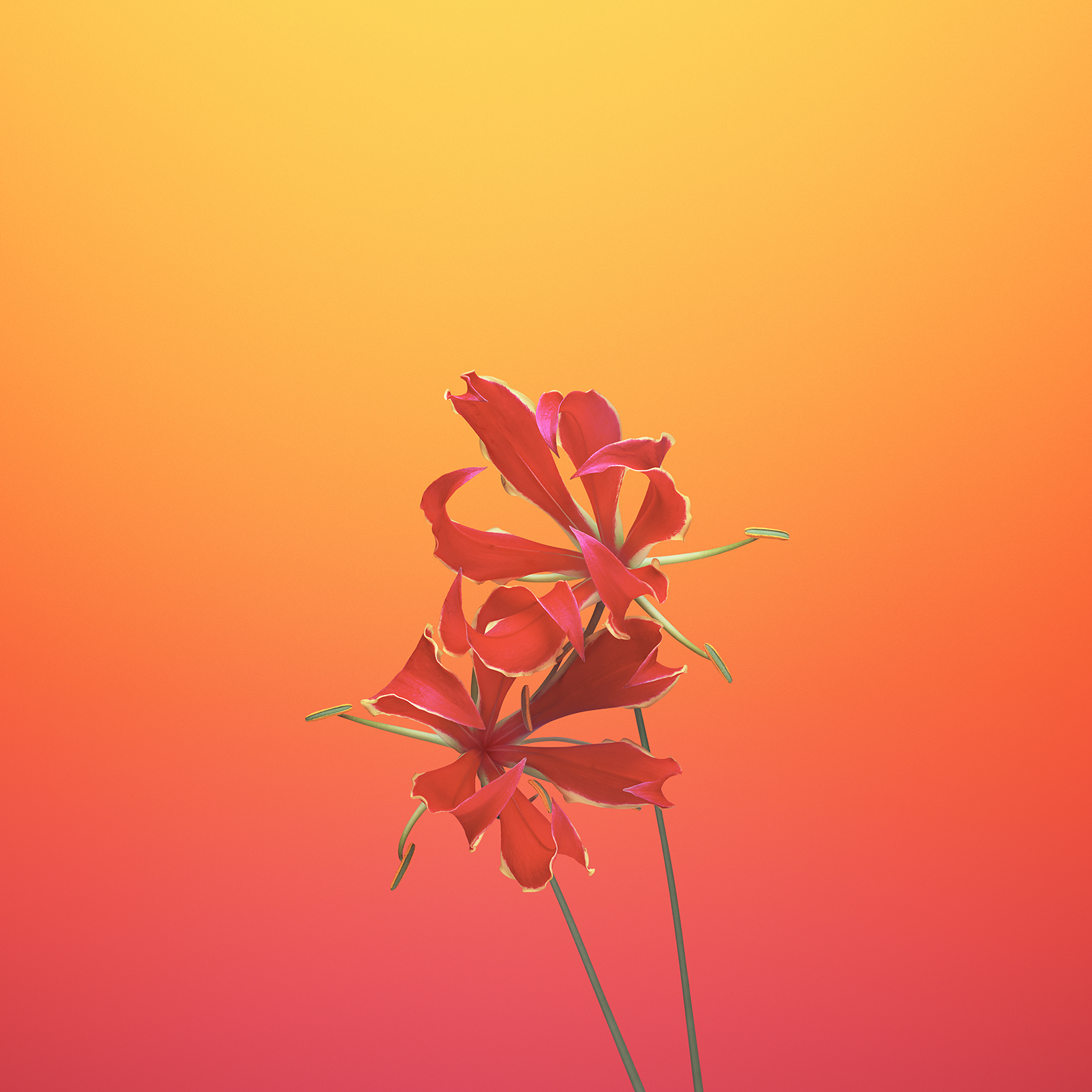 ios_11_gm_wallpaper_flower_gloriosa